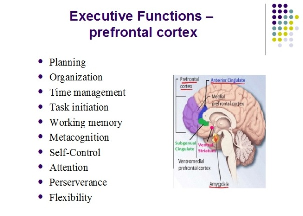 ExecutiveFunctions
